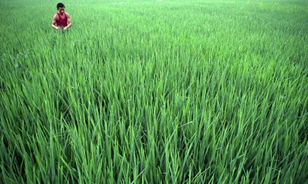 Bangladesh Bank revises farm credit rules